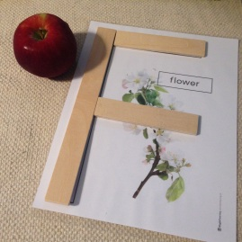 F for Flower, as part of the Apple's life cycle